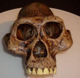 440px-Australopithecusafarensis_reconstruction