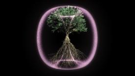 Torus Tree_A_02