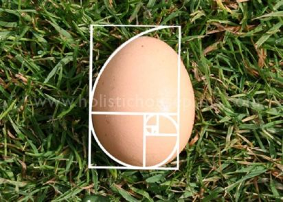egg golden ratio